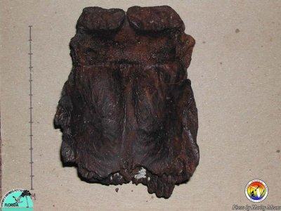 DugongSkull.jpg