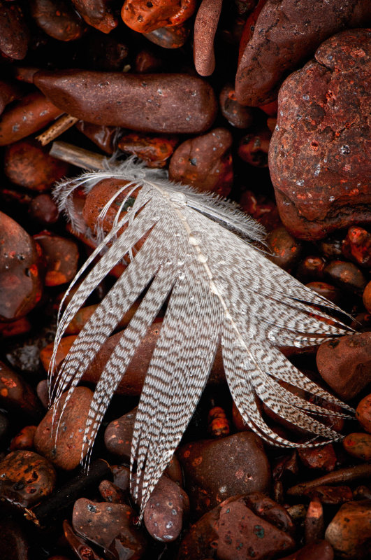 Feather with rain drops