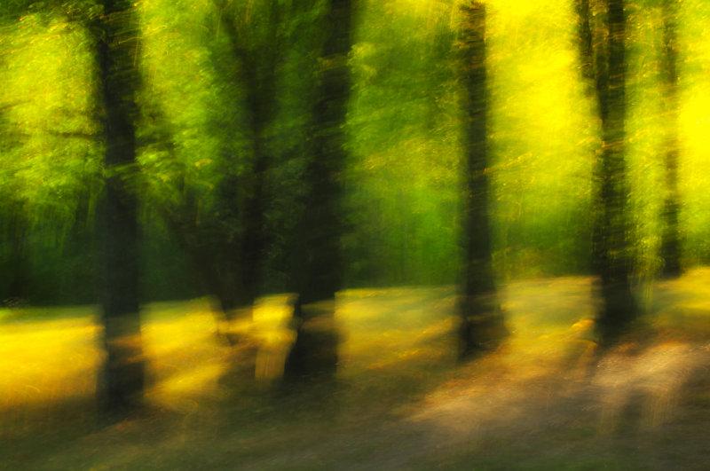 Light amongst the trees