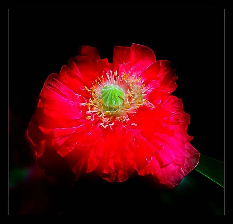 dream world poppy....