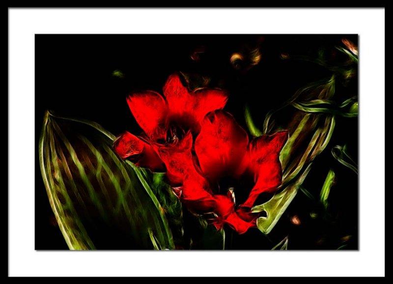 botanical tulips...