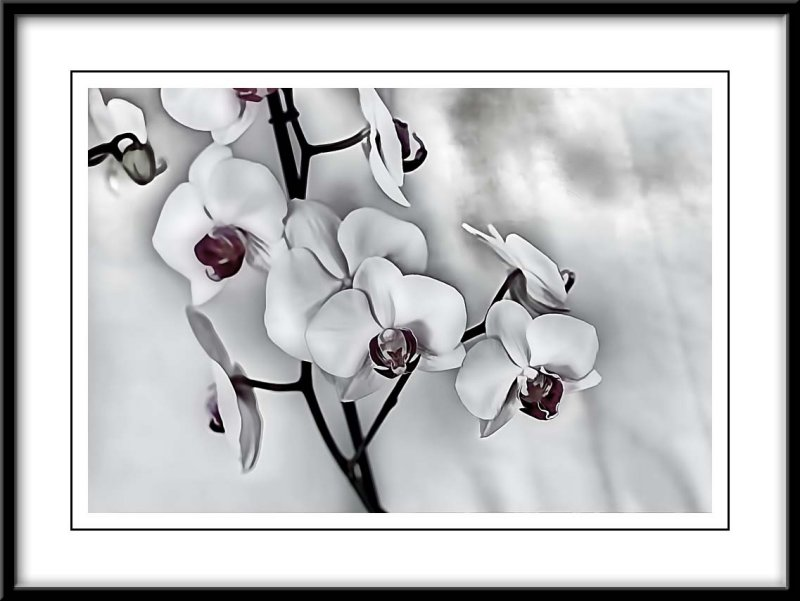 white orchids...