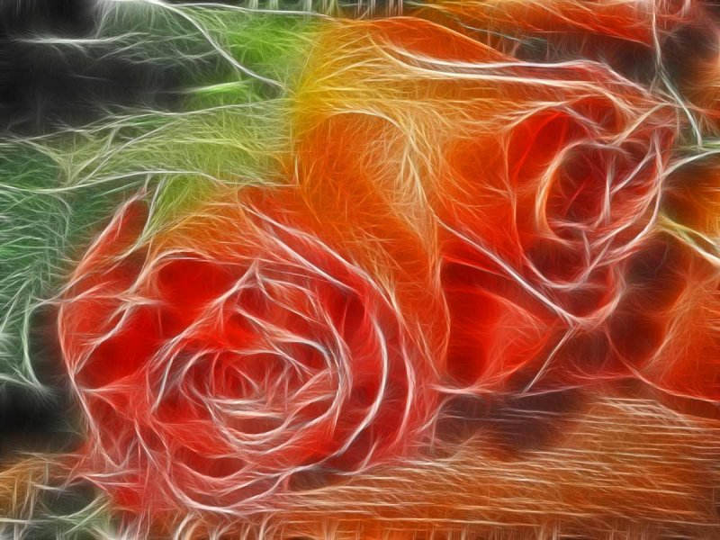 two peachy roses