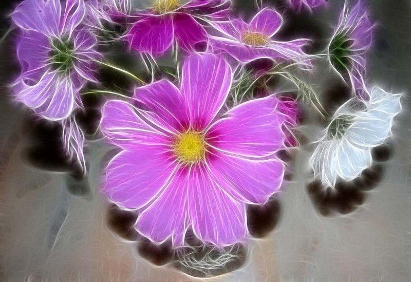 cosmos in a vase
