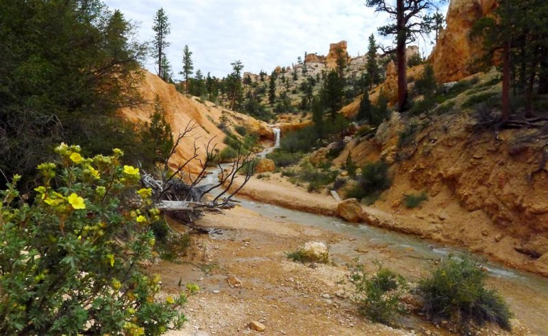 192 Bryce Canyon Mossy Cave 5.jpg