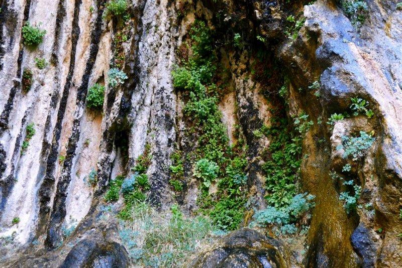424 Zion Weeping Rock 6.jpg
