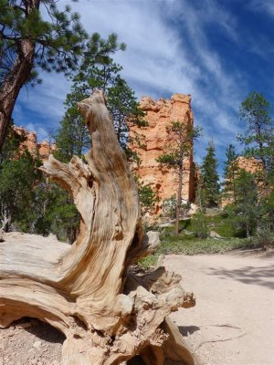 150 Bryce Canyon Navajo Queens Hike 25.jpg