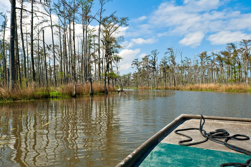Bayou Seen From A Boat