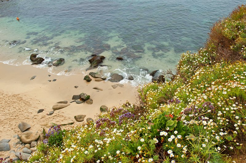Flowers, Stones, Sand, Ocean And A Man