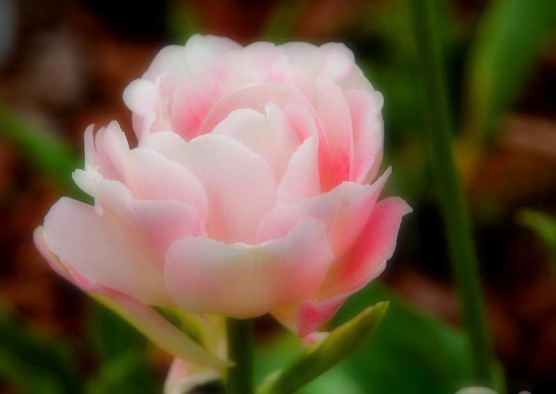Soft Beauty