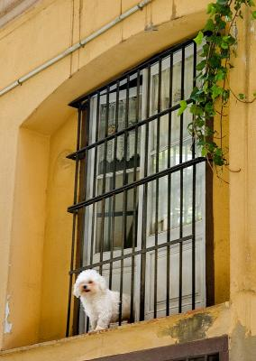 Window With Inhabitant