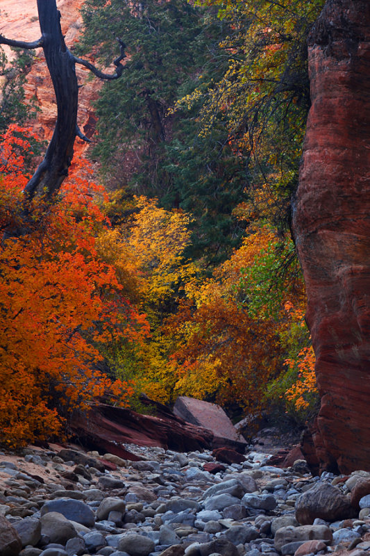 Canyon Color