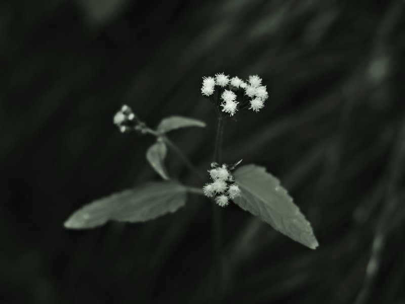some little flowers...