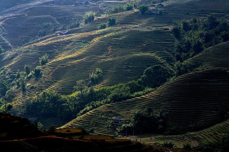 Sapa Rice-fields Vietnam