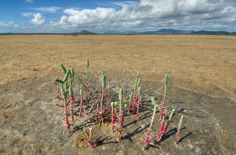Salt flat with plants _DSC4944