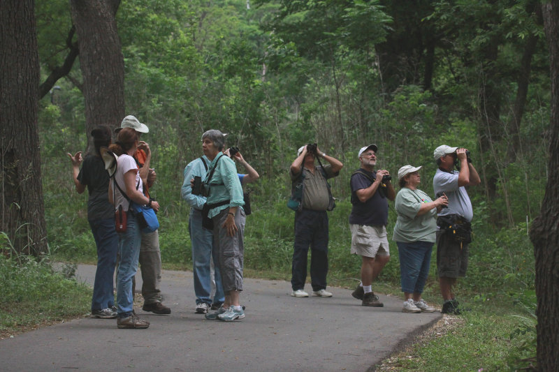 The Hunt for Warblers