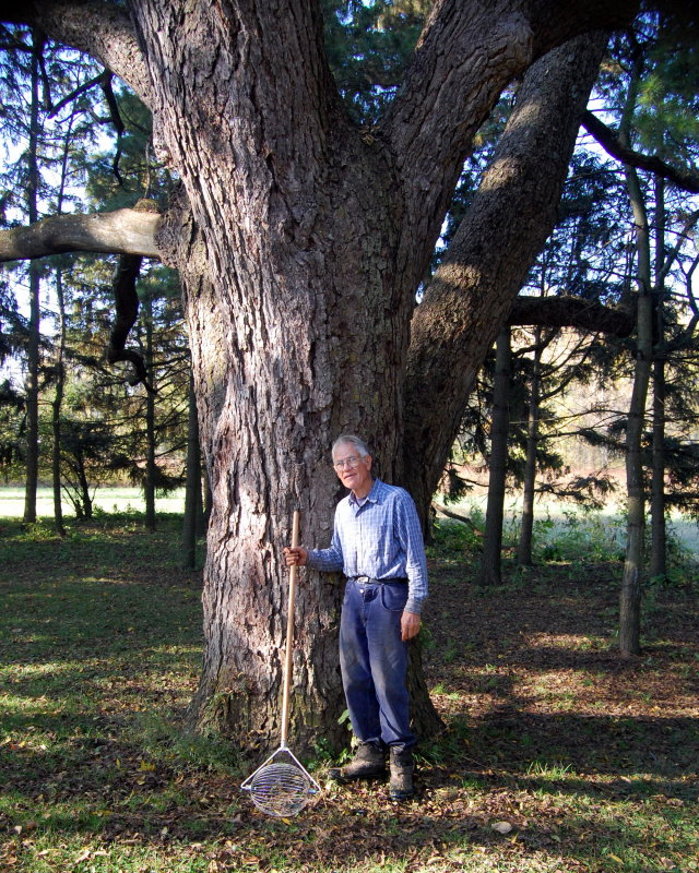 Tom Lawrence and his 200-year-old walnut tree       photo