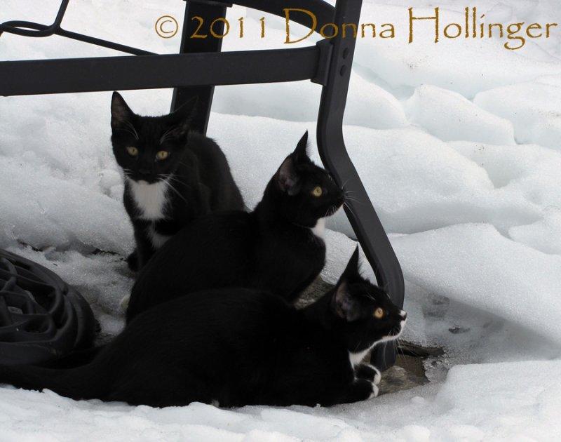 My Three Kitties Outside