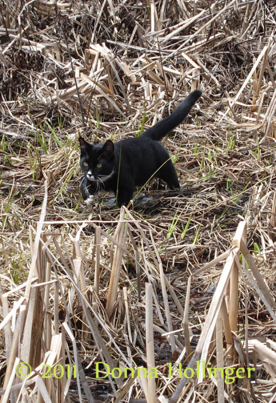 jimi jumping out of the cattails