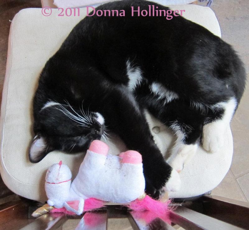 Rocky Kitty Sleeping with Uni