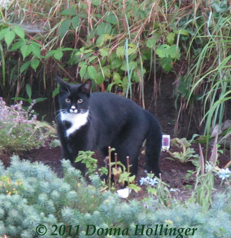 Jimi in the flower garden
