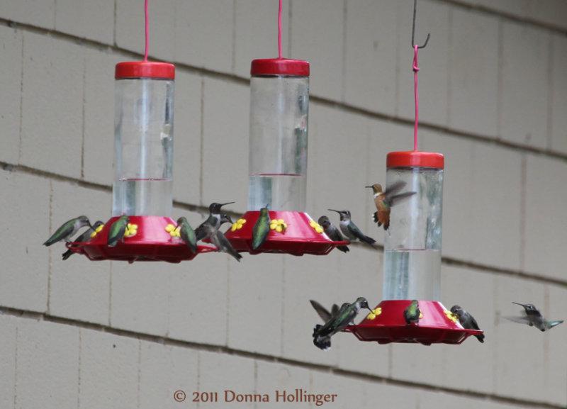 hummers.5690.jpg