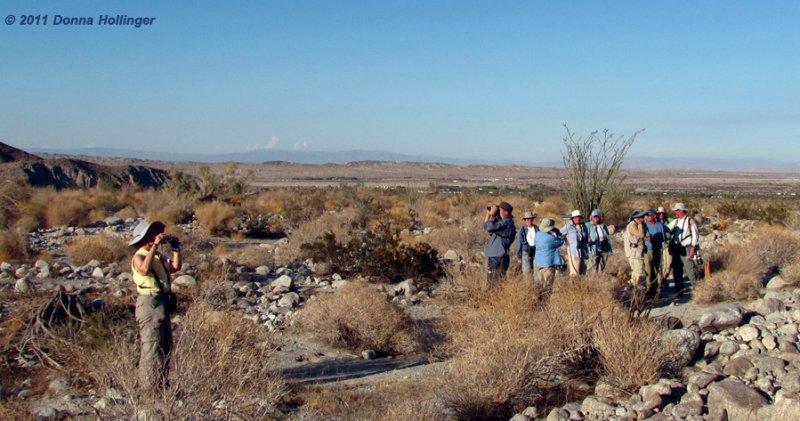 Looking for birds in the desert