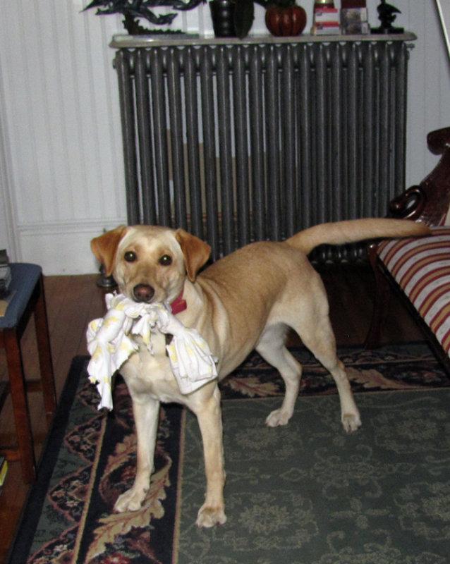 best doggie Shelby