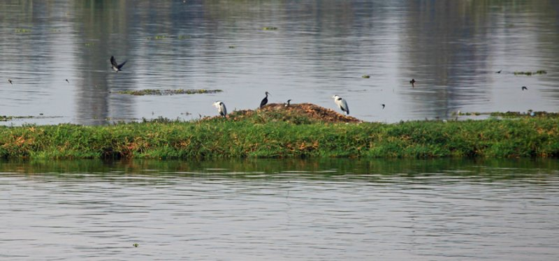 Nile: Herons and other birds