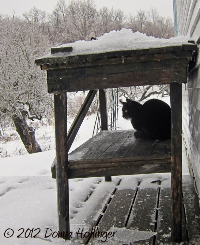 Jimi, sleet, rain and snow - birdwatching is still a priority!