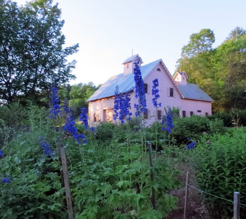 The Sheep House with Garden Delphinium
