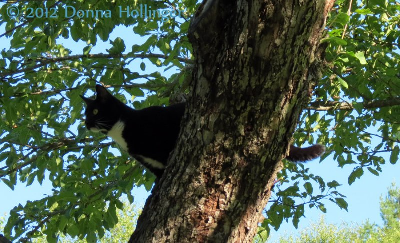 Rosie in the Apple Tree