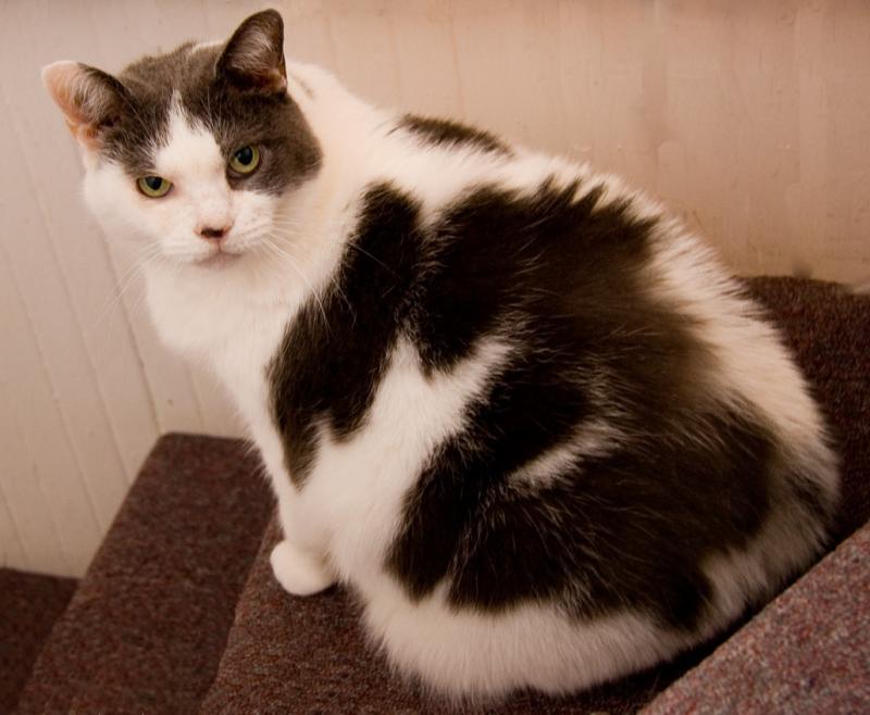 My beautiful kitty:  Van Loch