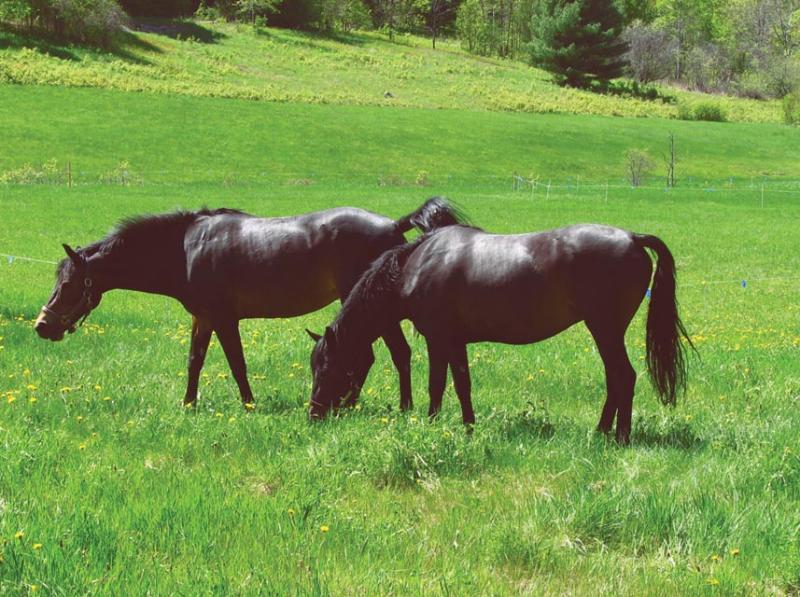 Equine pals