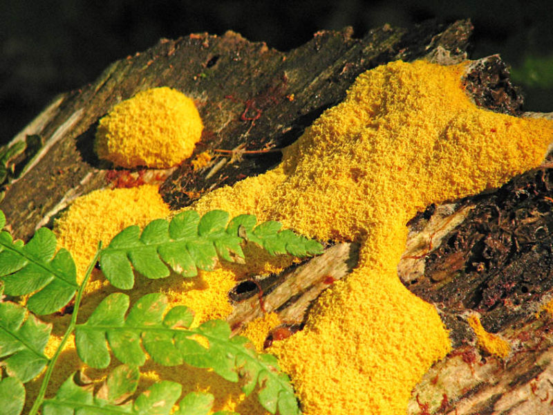 Yellow Mold, Green Fern, Red Blood