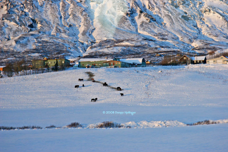 Icelandic Farm and Horses