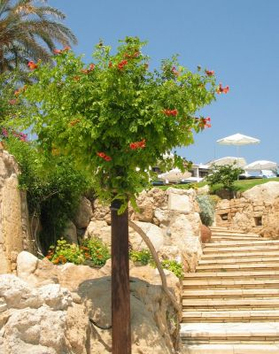 Stairs to Coral Beach
