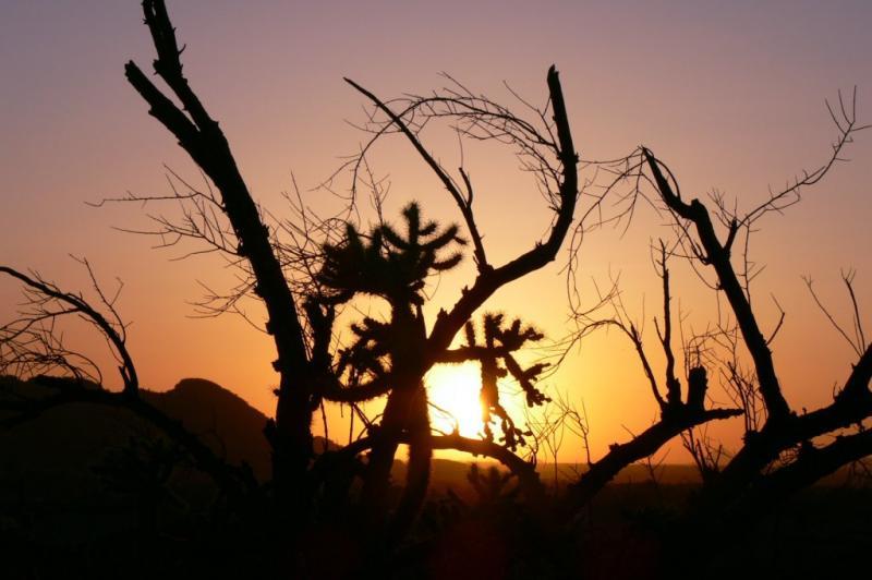 Arizona desert sunset....