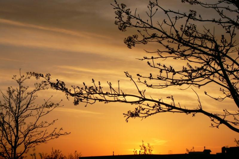 Spring sunrise...