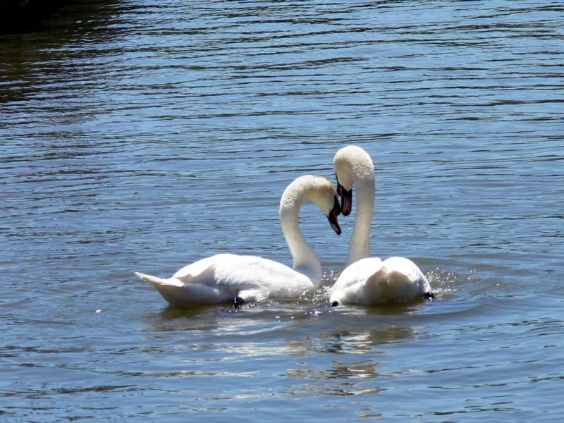 Water lovers..... the mating ritual