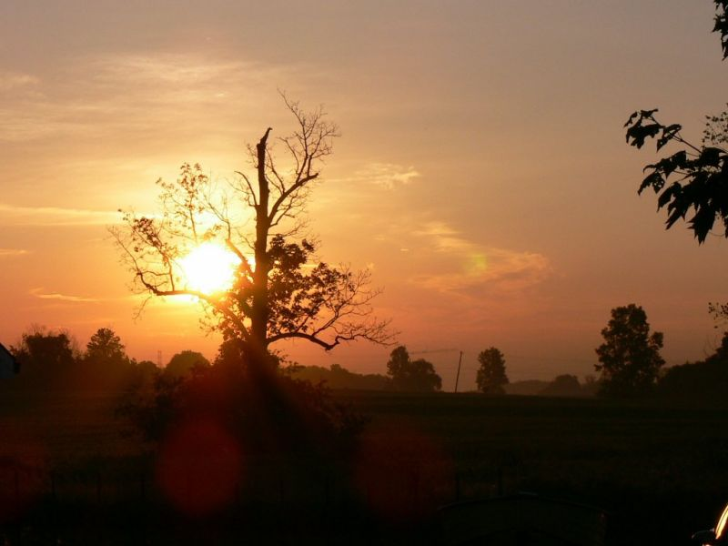 Dawn on the farm in Lambeth...