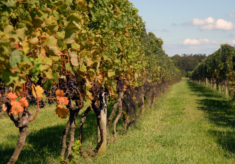 east end vineyards
