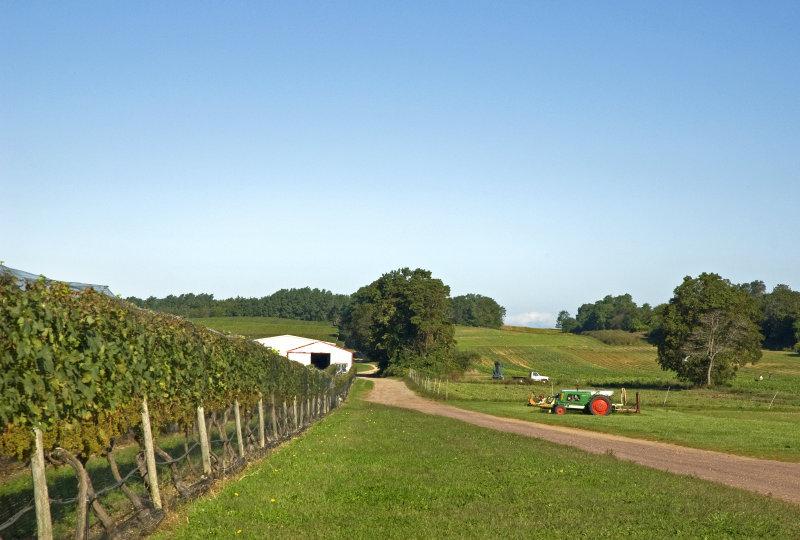 Aquebogue Winery