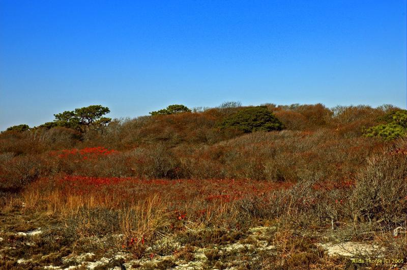The autumn dunes