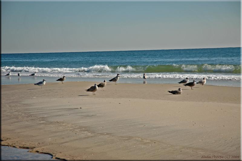 seagulls on sandbar