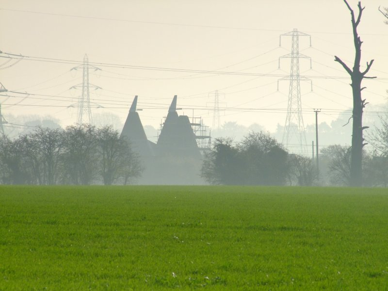 Oasthouses  in  the  mist.