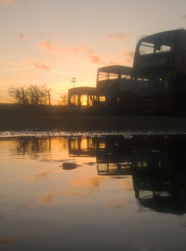 Buses  trained  on  the  sunset.