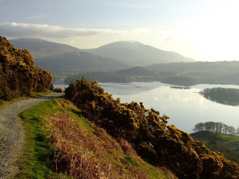 Approaching  the  gorse  above  Otterbield  Bay.