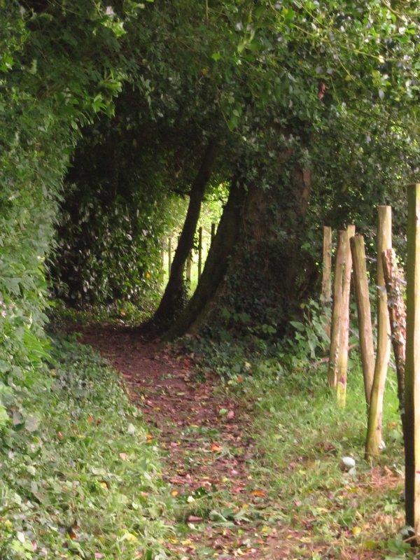 Wealdway  path  near  Stockland  Green.