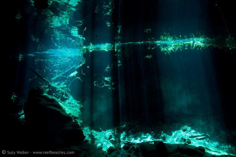 Kukulkan Cenote 8